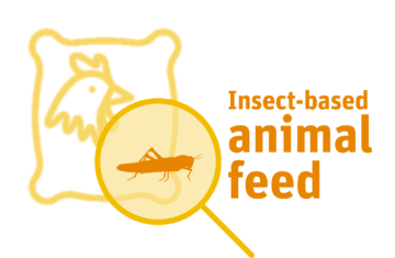 Insect based animal feed